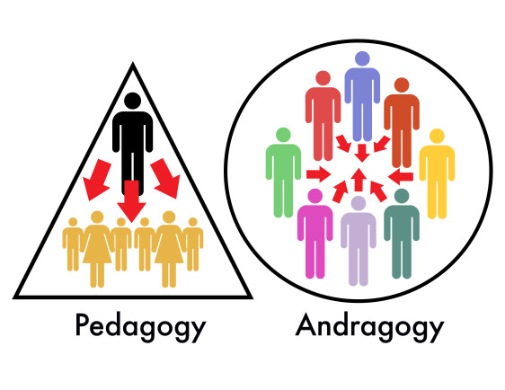 Andragogy: what is it and how it applies to adult learning?